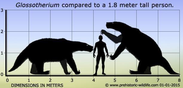 Размери на праисторическия ленивец