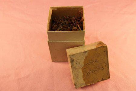кутийка с гринделия от 19-ти век
