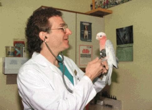 Лекар преглежда папагал