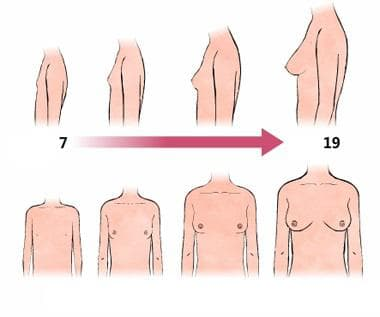 развитие на млечната жлеза