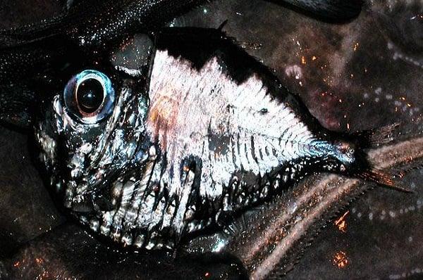 Риба секира