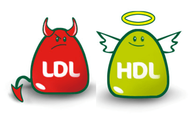 HDL и LDL