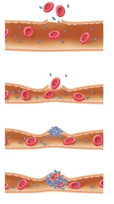 хемостаза