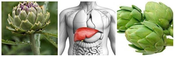 Хепатопротектори, съдържащи артишок - за здрав черен дроб