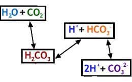 хидрогенкарбонатна буферна система