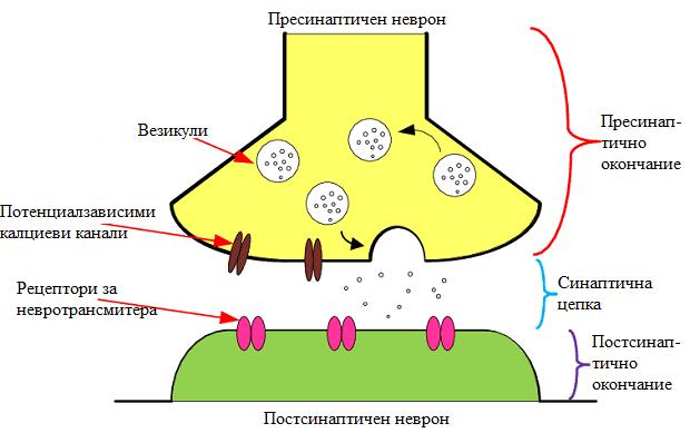 химичен синапс
