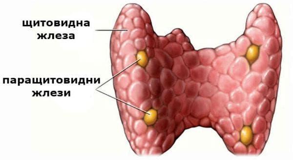 Хипопаратиреоидизъм - увреждане на паращитовидните жлези и ниски нива на паратхормона