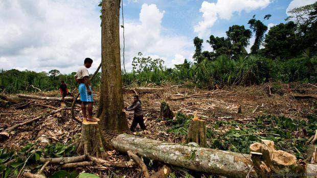 местни жители отсичат дърветата