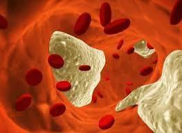 кръвни клетки и холестерол