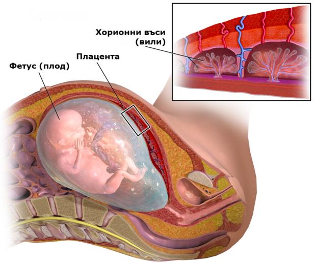 Хорионна биопсия