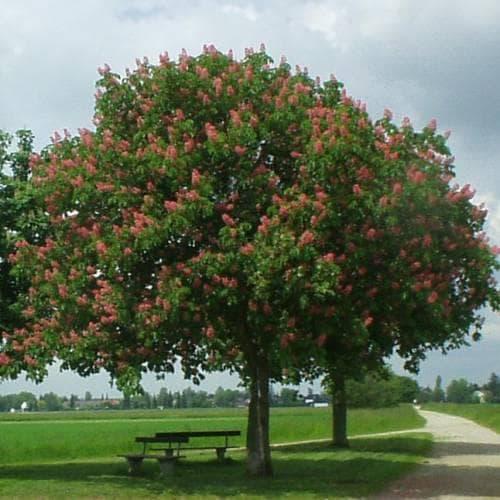 флорална декорация с червен конски кестен