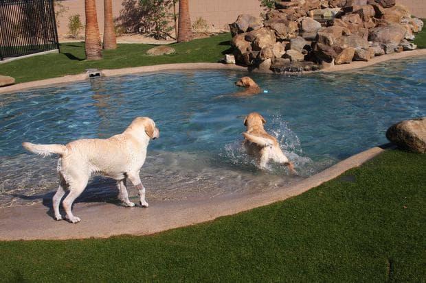 басейн за животни