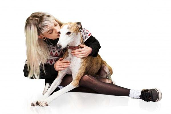 куче, хрътка, момиче с куче