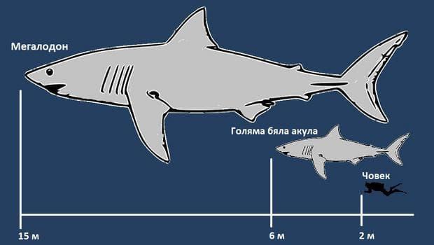 Акулата Мегаодон