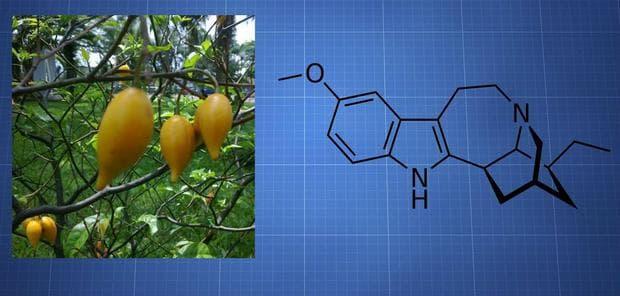 Ибога и химична структура на ибогаин