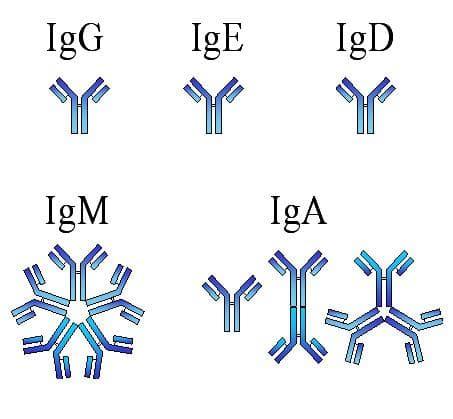 имуноглобулини