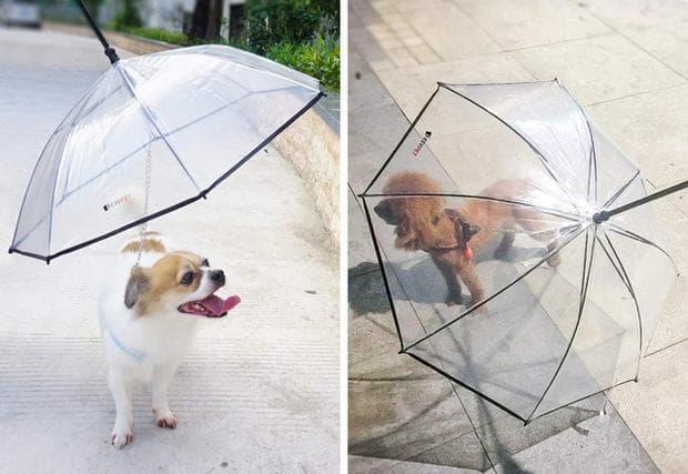 кучешки чадър