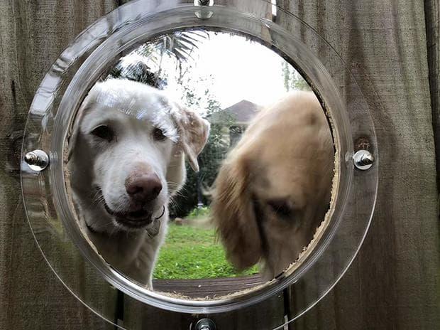 кучешки прозорец