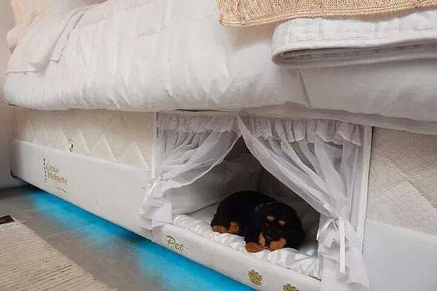 легло в леглото