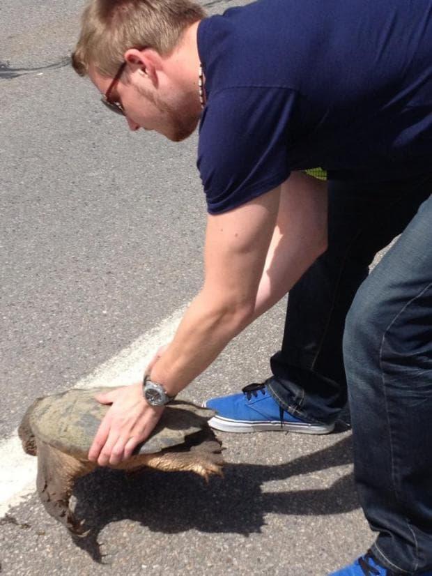 първа среща с костенурка