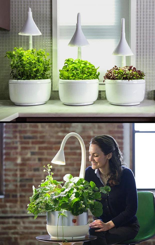 умна домашна градина