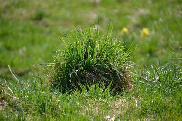 Използвайте сода бикарбонат срещу плевели и треви.