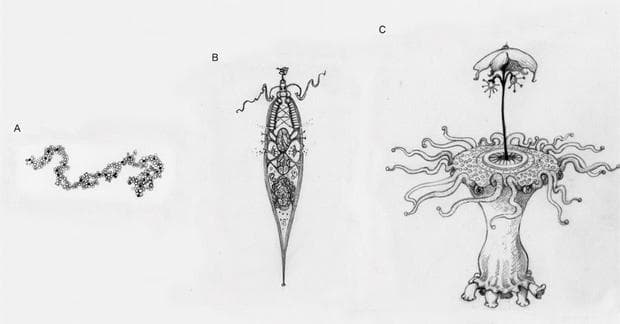 Едноклетъчни извънземни организми