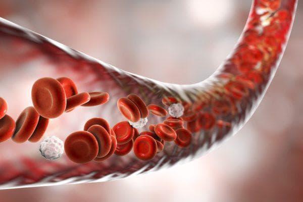 Червени кръвни клетки в кръвоносен съд