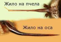 Жило на оса и пчела