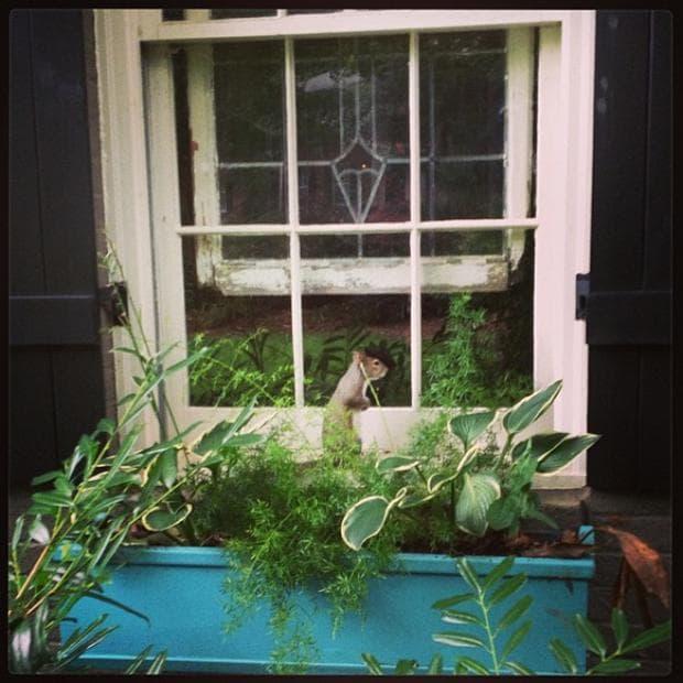 катерица на прозорец