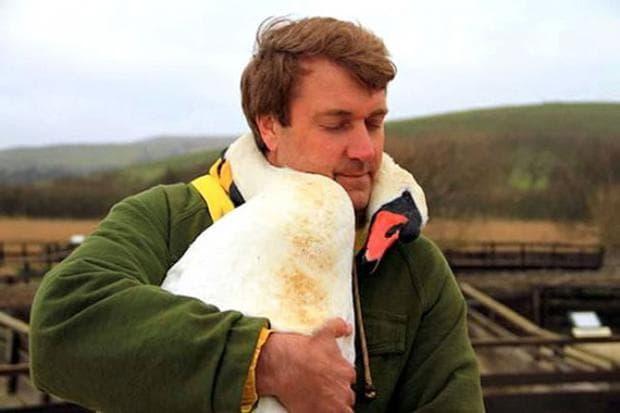 лебед прегръща своя спасител