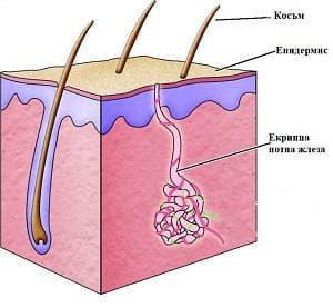 потна жлеза