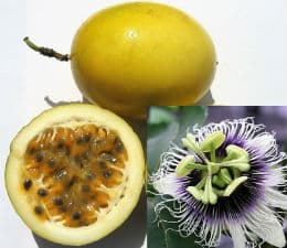 жълт плод маракуя