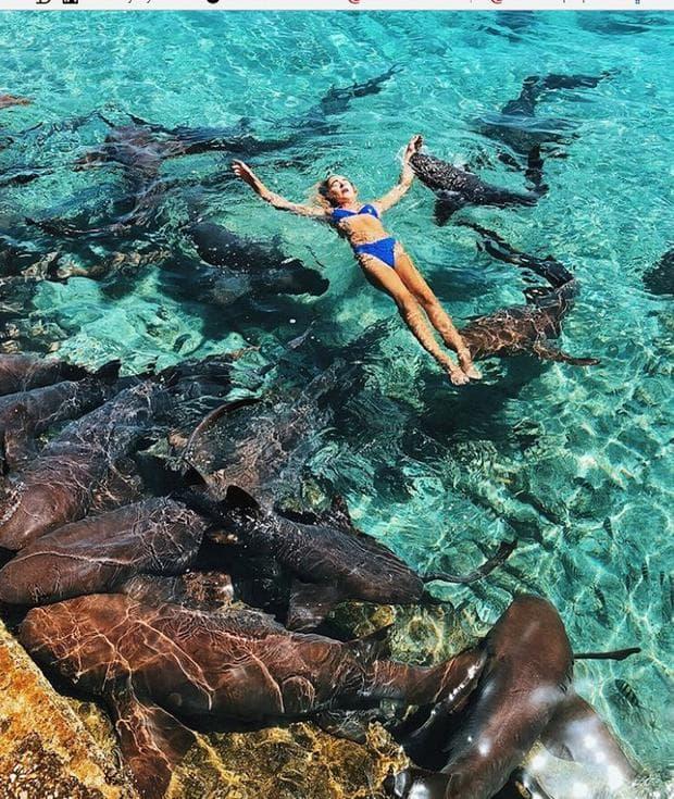 плуване с акули