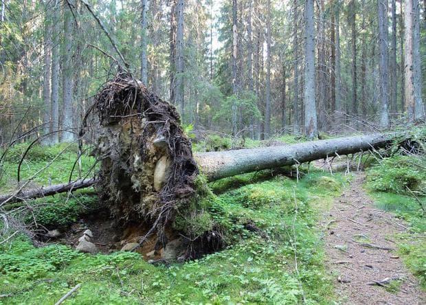 дърветата ще паднат
