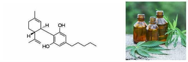 Какво представлява канабидиол, съдържащ се в конопеното масло?