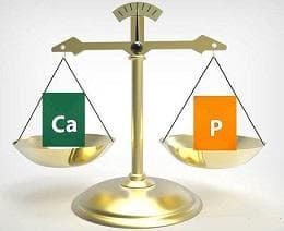калций и фосфор