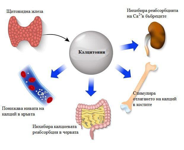 калцитонин