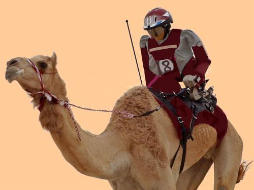 kamila-s-robotiziran-jokey
