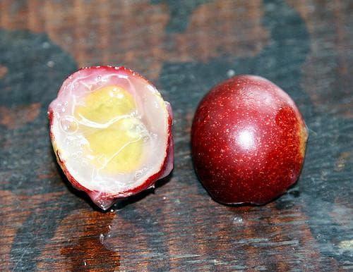плод каму каму