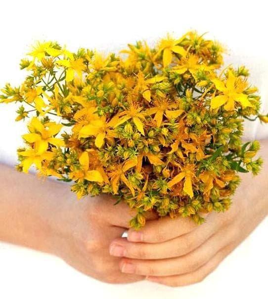 букет от жълт кантарион