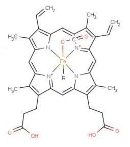 карбаминохемоглобин