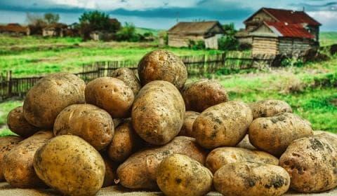 картина с картофи