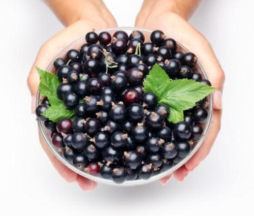 Плодове касис