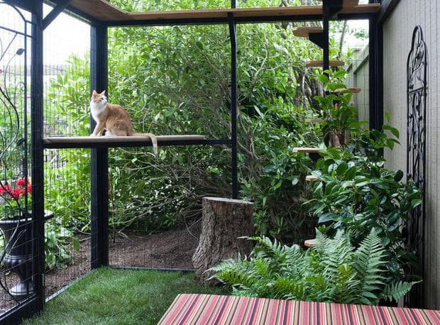 Котешки двор