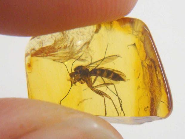 насекоми в кехлибар
