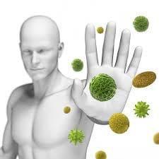 кисело зеле и имунна система