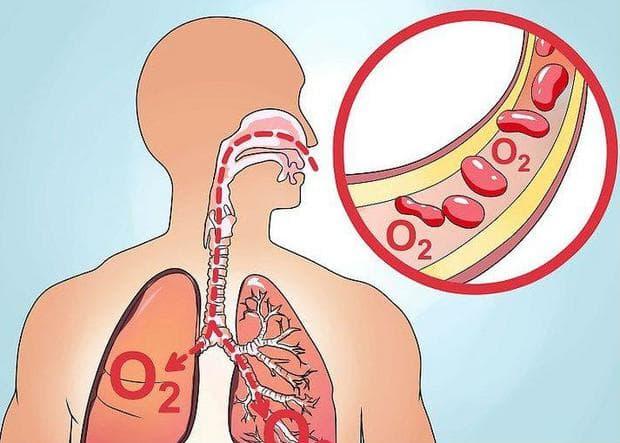 транспорт на кислорода в кръвта