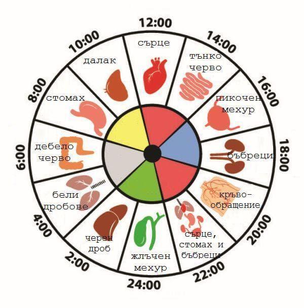 Китайски биологичен часовник