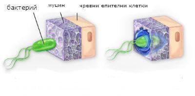 клетъчно увреждане